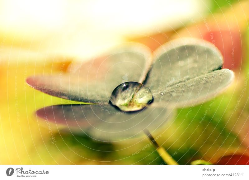 lucky drop of water Environment Nature Plant Water Drops of water Sunlight Beautiful weather Flower Grass Leaf Foliage plant Cloverleaf Meadow Happy Wet Yellow
