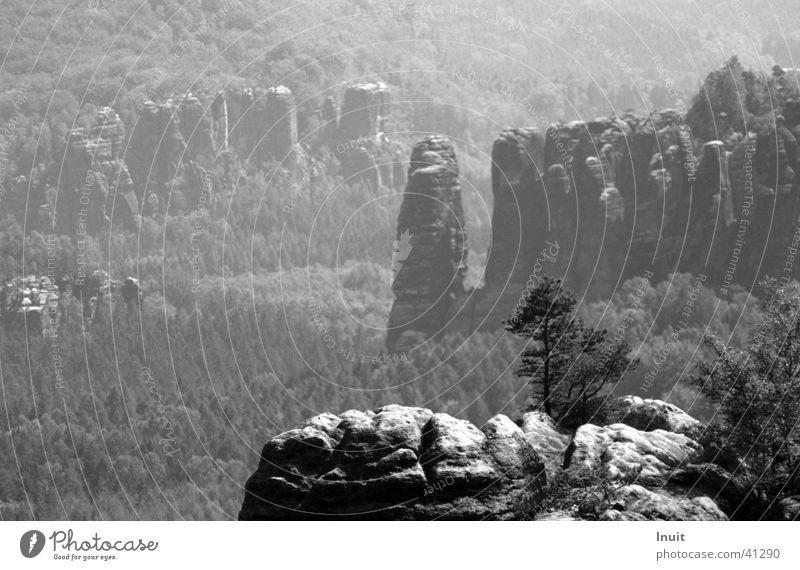 Saxon Switzerland Saxony Vacation & Travel Tree Sandstone Mountain Black & white photo Mountain hiking