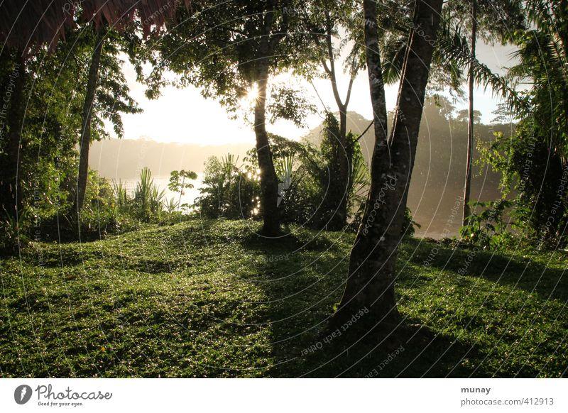 rainforest Virgin forest Amazonas Forest Tree Rain Rainwater Sun Wet Green Nature Peru tambopata National Park Refreshment