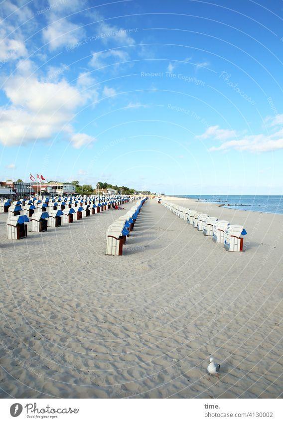 seated area (20) with seagull Beach chair coast Sand Ocean Horizon Seagull Clouds Sky Beautiful weather Flag Village Beaded Arrangement