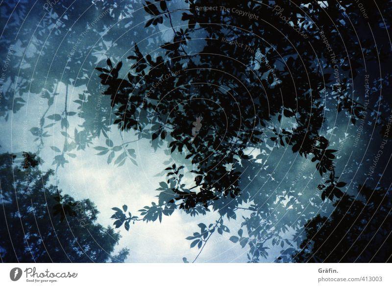Nature Blue Plant Summer Tree Landscape Calm Leaf Environment Dark Growth Romance Network Chaos Foliage plant