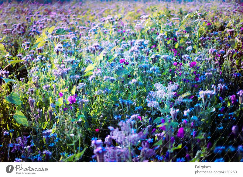 very colorful summer meadow Plant Copy Space romantic Blossom leave Flower Smooth Neutral Background Fine Esthetic Natural color blooming spring flower
