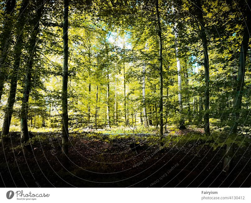 a green forest in summer Calm Sadness Nostalgia daylight naturally natural light environment scenery background leaves woodland vibrant Moody outdoor mood