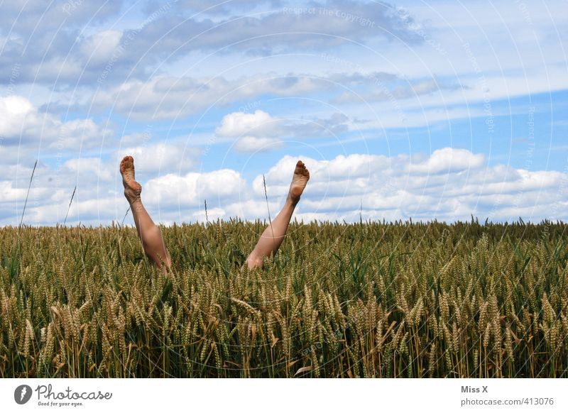 dive Playing Dive Human being Legs Feet 1 Field Funny Joy bed in cornfield Cornfield Hop Hide Handstand Exterior shot Head first Wheatfield Absurdity Jump