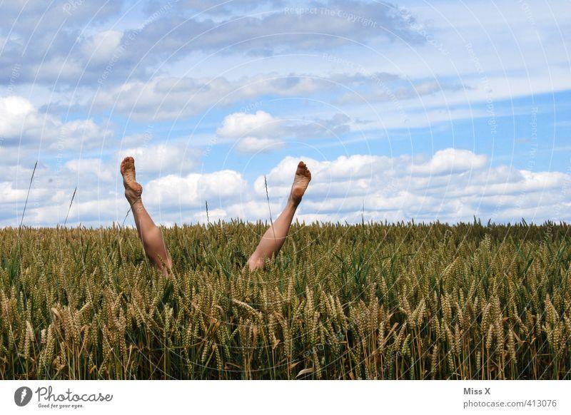 Human being Joy Playing Funny Legs Jump Feet Field Dive Hide Cornfield Hop Absurdity Handstand Wheatfield Head first