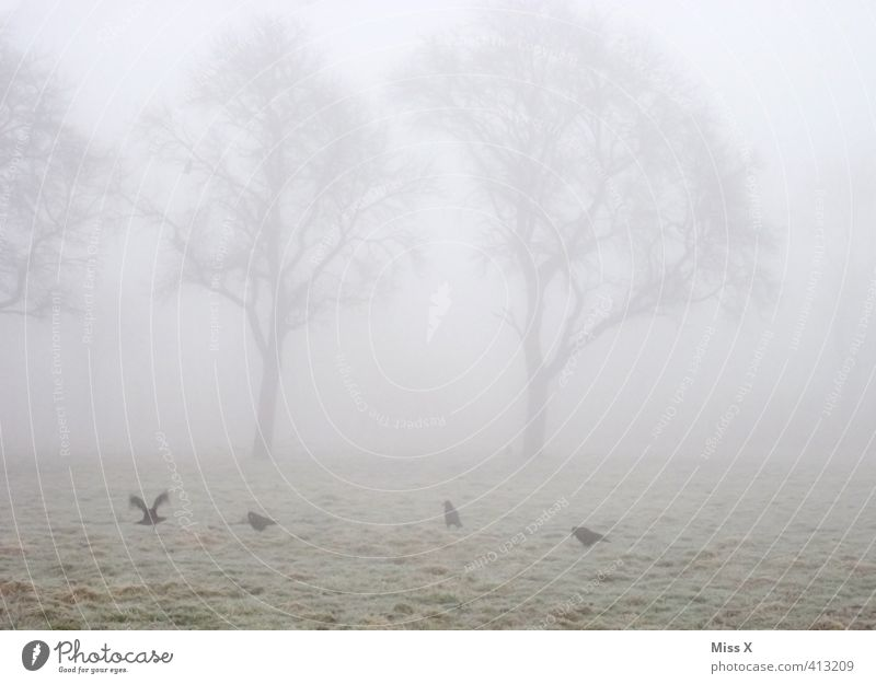 Tree Animal Winter Cold Death Autumn Moody Weather Field Fog Wild animal Gloomy Grief Fatigue Pigeon Bad weather