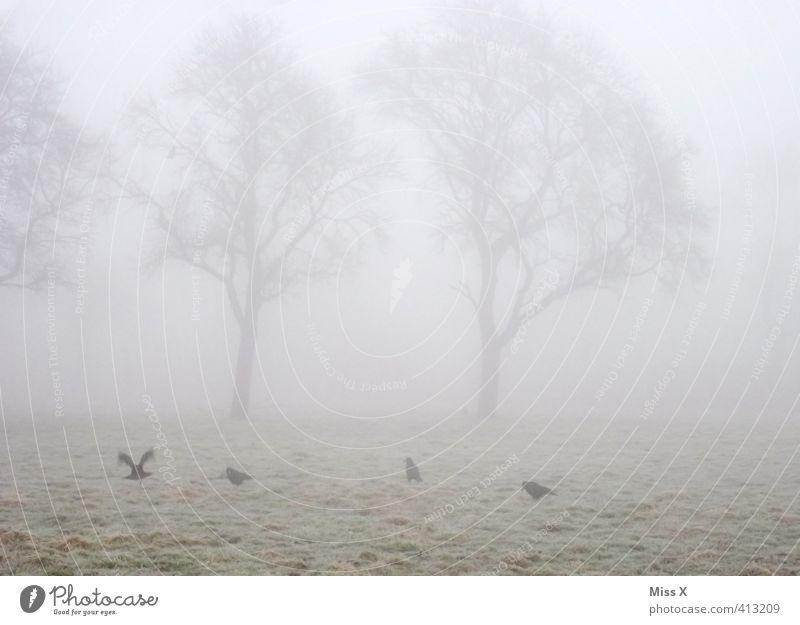 Tree Animal Winter Cold Death Autumn Moody Weather Field Fog Wild animal Gloomy Grief Fatigue Pigeon Bad weather