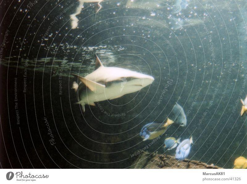 Shark Monaco
