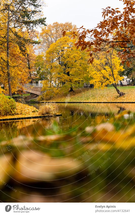 Low angle vertical shot to canal water, bridge and to red oak and yellow maple trees during autumn day at Bastion Hill Park, Riga, Latvia. Fall near canal. Foliage at park near curvy stream.