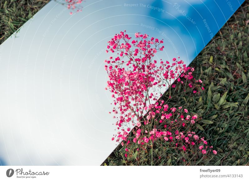 Amazing flat lay with the sky on a mirror, pink flowers and grass scene background abstract mockup copy space rectangle clouds nature light natural no people