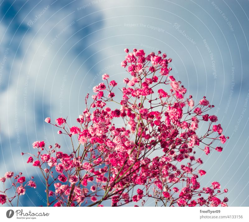Pink flowers against the sky pink scene background abstract grass mockup copy space rectangle clouds nature light natural no people nobody organic shape simple