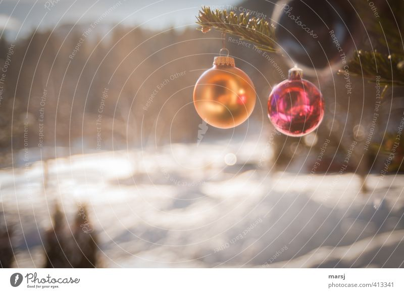 What, already? Winter Christmas & Advent Decoration Kitsch Odds and ends Glitter Ball Sphere Hang Illuminate Gold Red Colour photo Multicoloured Exterior shot