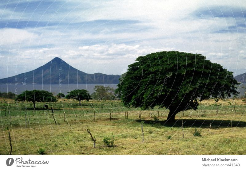 Momotombo Central America Tree Volcano Nicaragua Pasture Lake Managua