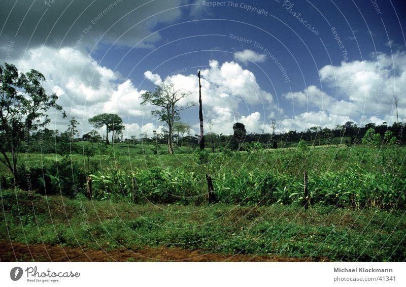 Zelaya Sur Virgin forest Logging Americas Agriculture Nicaragua colonisation