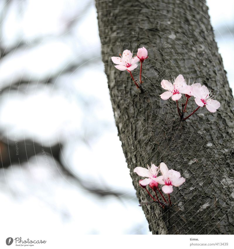 Nature Beautiful Green Plant Tree Environment Life Emotions Lanes & trails Spring Blossom Pink Growth Might Change Uniqueness