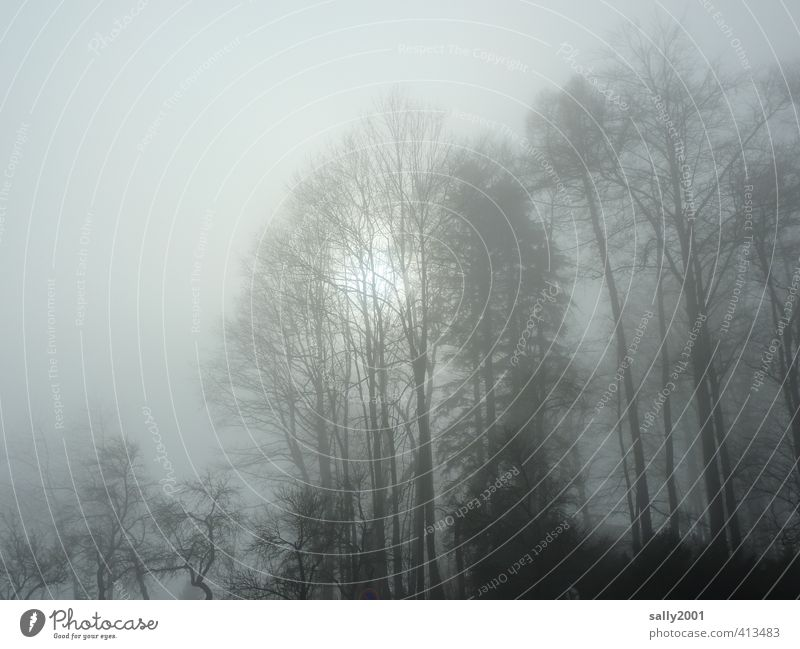 Nature Plant Sun Tree Loneliness Calm Clouds Winter Forest Dark Environment Cold Sadness Dream Ice Park