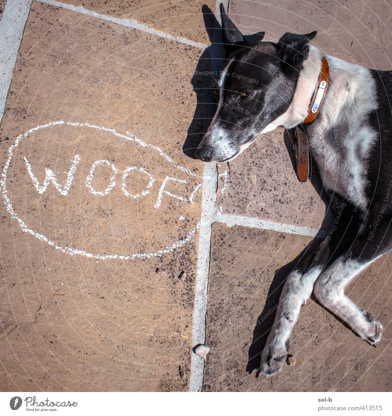 woof Animal Pet Dog 1 Funny Black White Grouchy Salutation Dog's head Chalk drawing Joke Rest Speech bubble Animal sounds Lie Cynical Greyhound Terrace