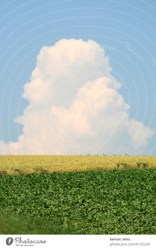 Storm cloud grows into tower cloud like monster thundercloud cloud tower Weather Field agrarian acre Blue Yellow Green Source cloud Caution Agriculture Sky