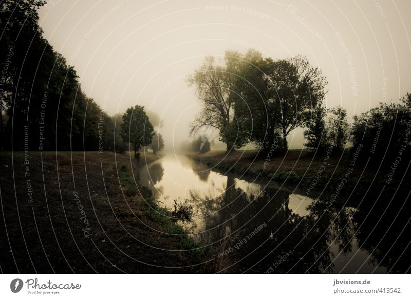 Nidda in the fog Landscape Water Fog Tree River Dream nidda Mysterious Subdued colour Exterior shot Deserted Copy Space left Copy Space bottom Dawn Contrast
