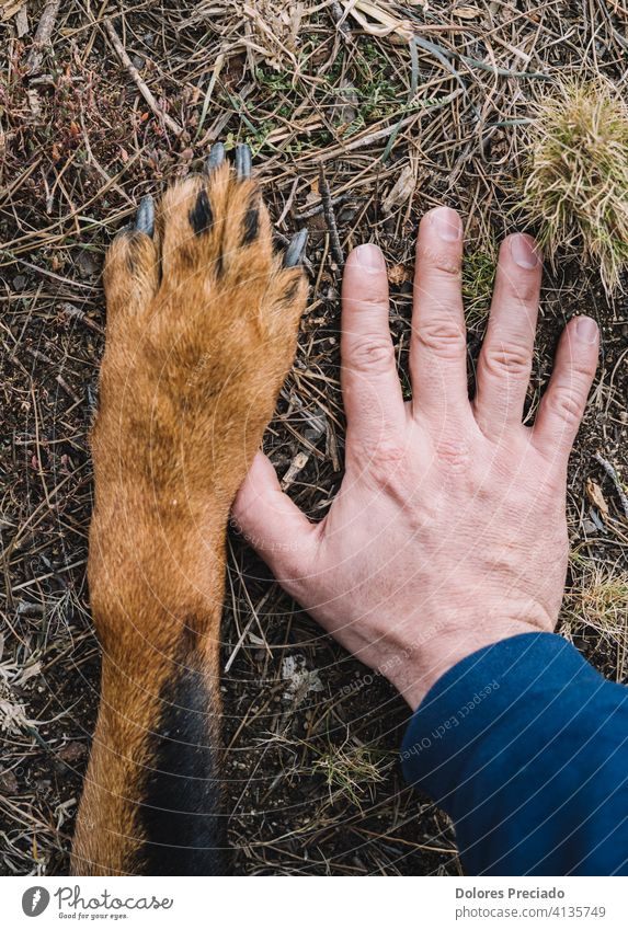 Dog's paw and man's hand Brown Beautiful Exterior shot woods Forest sunny Determination Wild Happiness Happy Friendliness Strong Pet doggy Rotti Mammal Sit