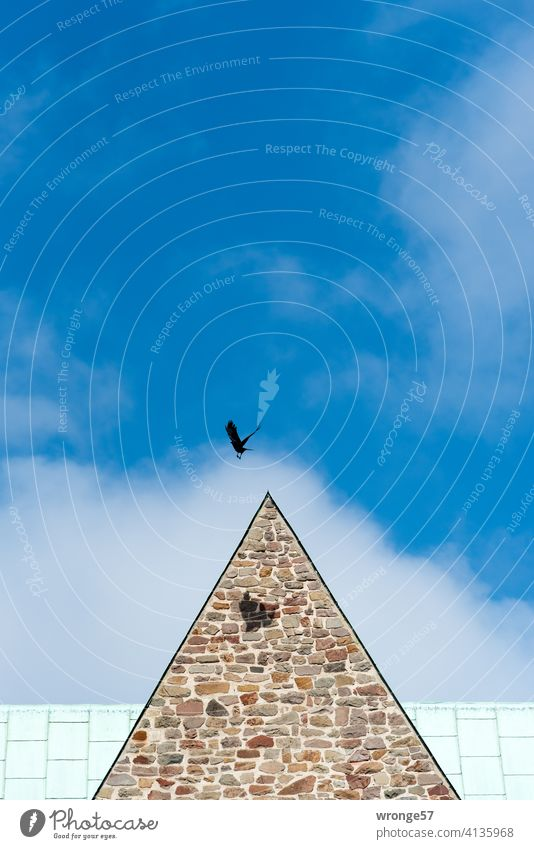 Boundless | a crow flies over the roofs of a church, its shadow falls on the masonry of the same boundless Crow Church church roof Flying flight Sky