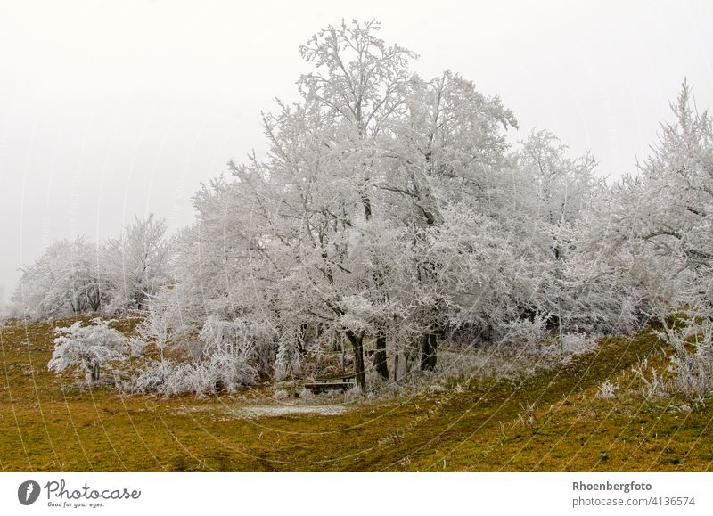 White frosted trees on a very cold winter day without snowfall Mature Frost chill Snow Cold drop in the temperature Precipitation Gray Fog Bench Hiking Rhön