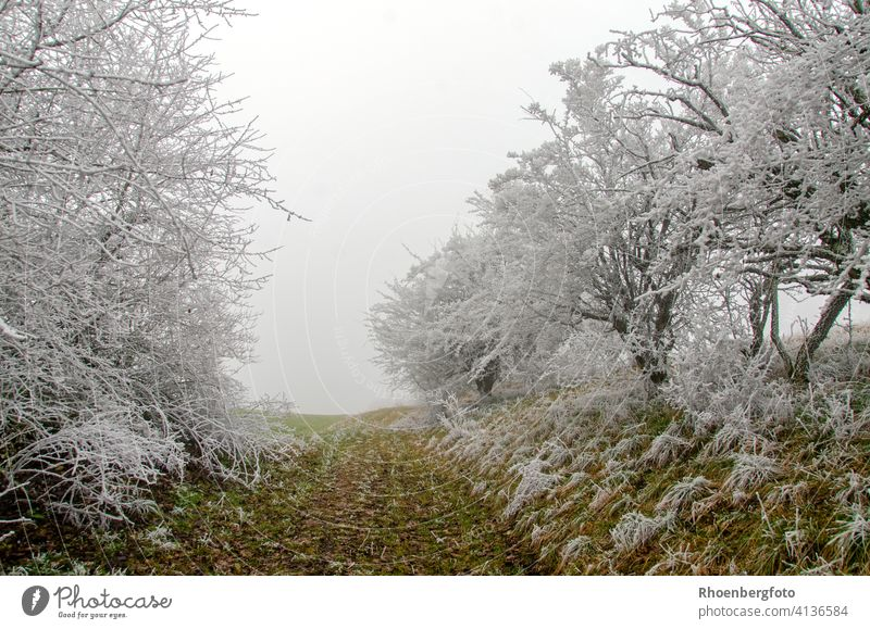 The path leads out of the white winter fairy tale forest.... Winter Fairy tale Forest trees Tree woody Plant Landscape White Green Nature Environment Climate