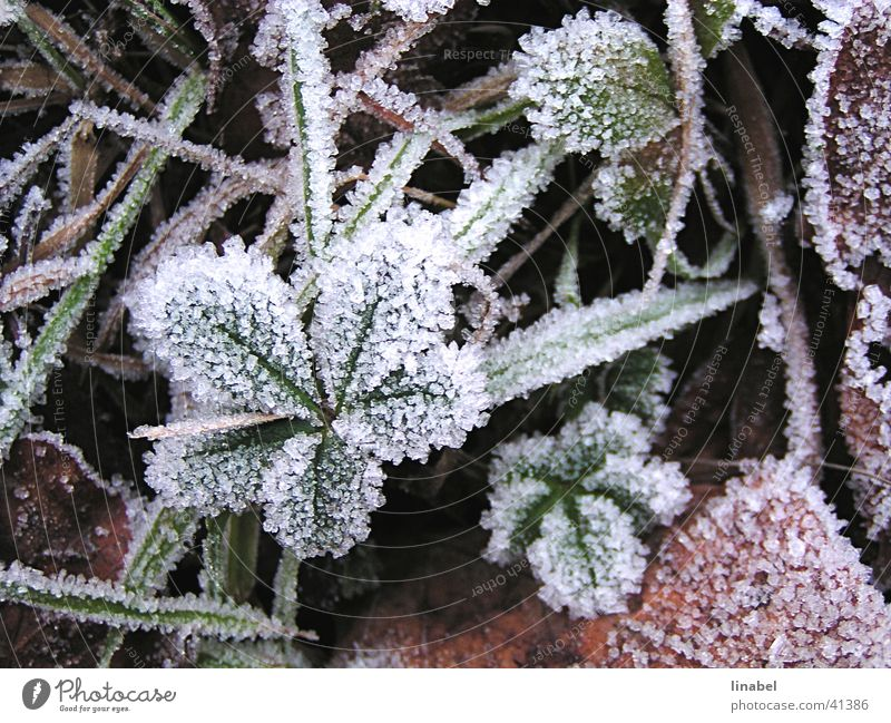 Winter Leaf Cold Ice Frost Hoar frost Ice crystal