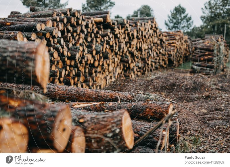 Pile of pine wood pile Pine Wood lumber Industry timber tree forest trunk log nature natural stack industry woodpile cut material forestry stacked firewood