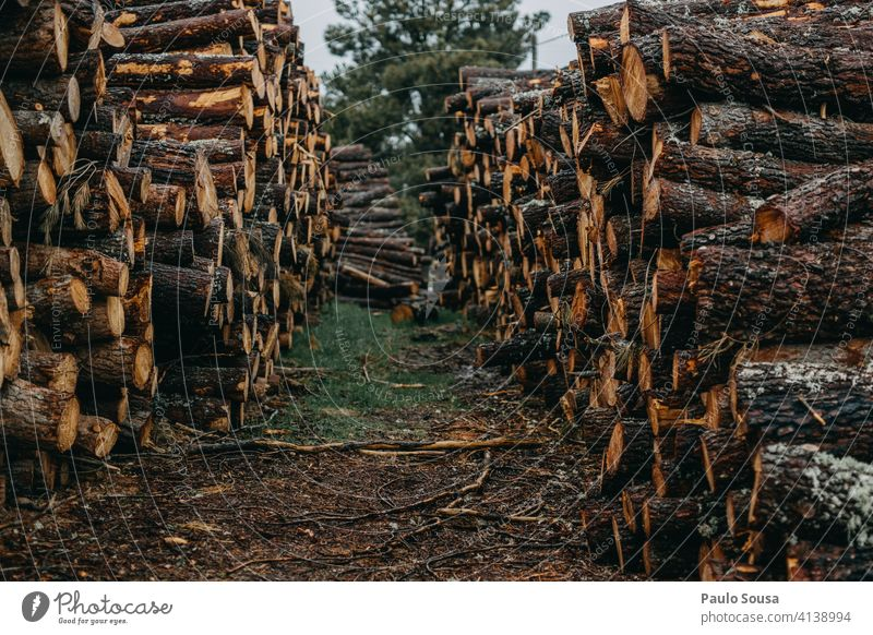 Pile of pine wood pile Pine lumber timber tree forest natural wooden log background trunk material nature woodpile Nature cut stack environment Tree industry