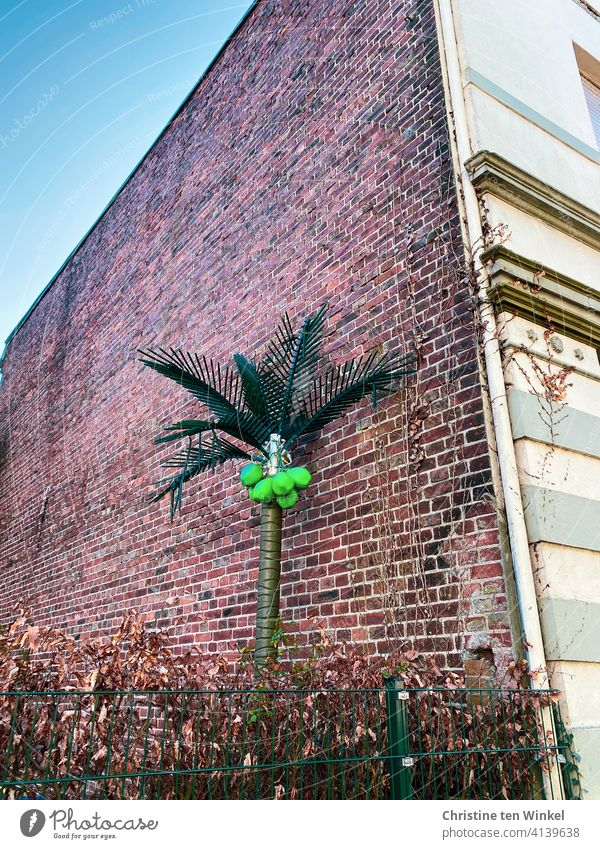 An artificial palm tree with bright green coconuts stands on the side brick facade of an old house behind a picket fence and a beech hedge. Coconut tree