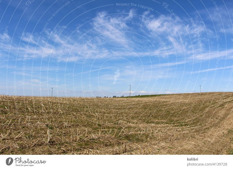 Stubble field or harvested field under blue sky with veil clouds Field Landscape Agriculture Deserted Colour photo Straw Exterior shot Beautiful weather Horizon