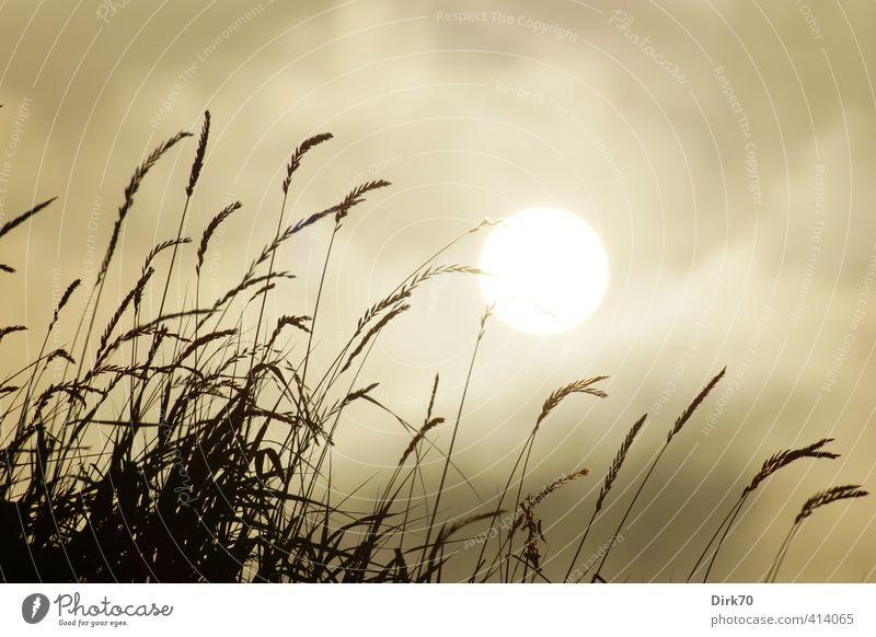Sky Nature White Plant Summer Sun Clouds Black Dark Meadow Warmth Grass Gray Garden Brown Weather