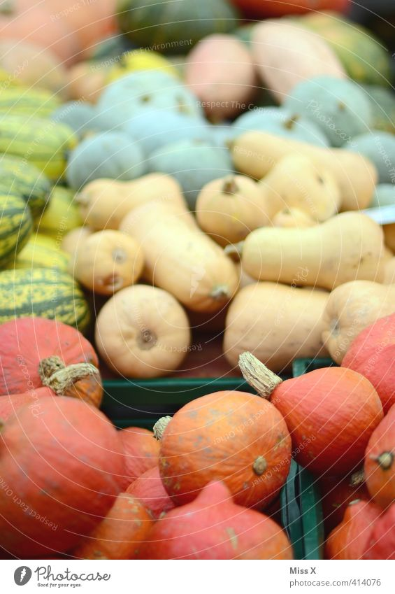 pumpkin season Food Vegetable Nutrition Organic produce Vegetarian diet Diet Fresh Healthy Delicious Round Pumpkin variety Many Sell Harvest Market stall