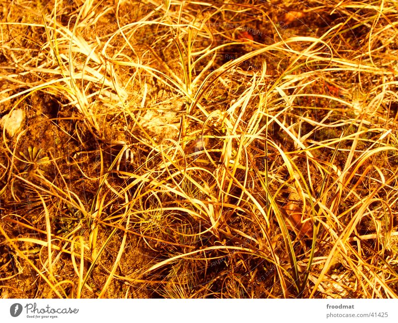 hairy country Long exposure Grass Leaf Structures and shapes Subsoil Night Floor covering Earth