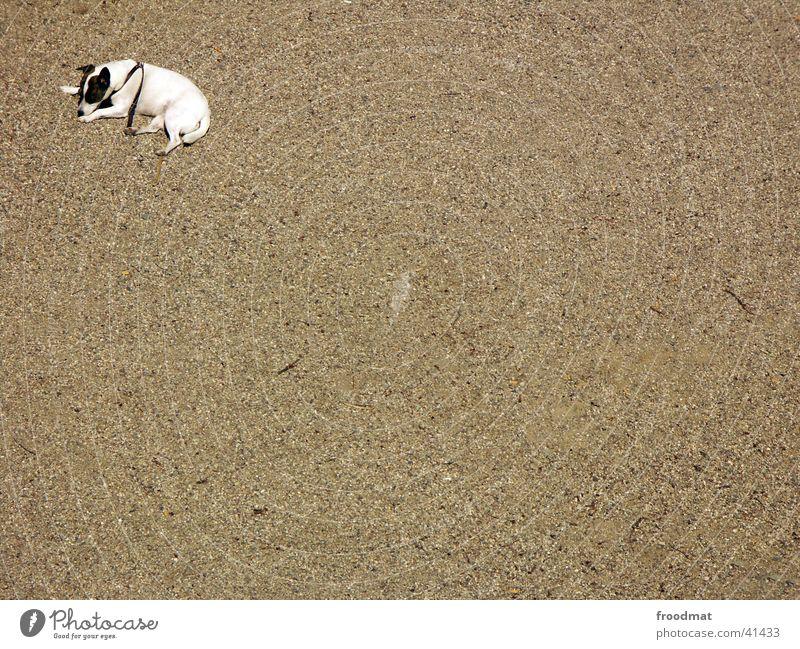 corner dog Dog Pebble Loneliness Fatigue Bird's-eye view Sand Empty Corner Lie Gravel Street dog
