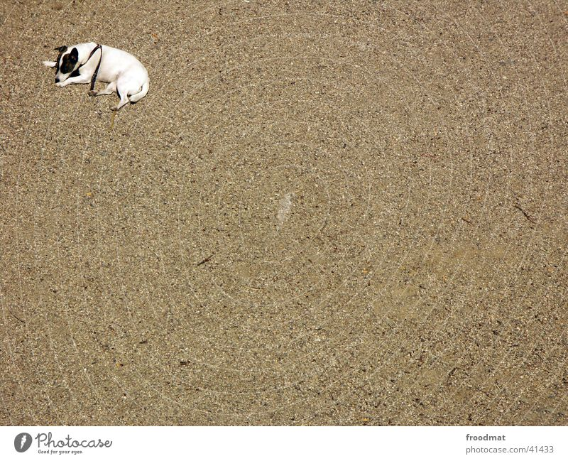 Loneliness Dog Sand Empty Corner Lie Fatigue Gravel Pebble