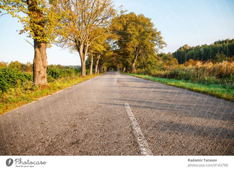 asphalt road in the forest new trip drive summer travel country highway journey green nature outdoor landscape empty view tree environment freeway sunshine far