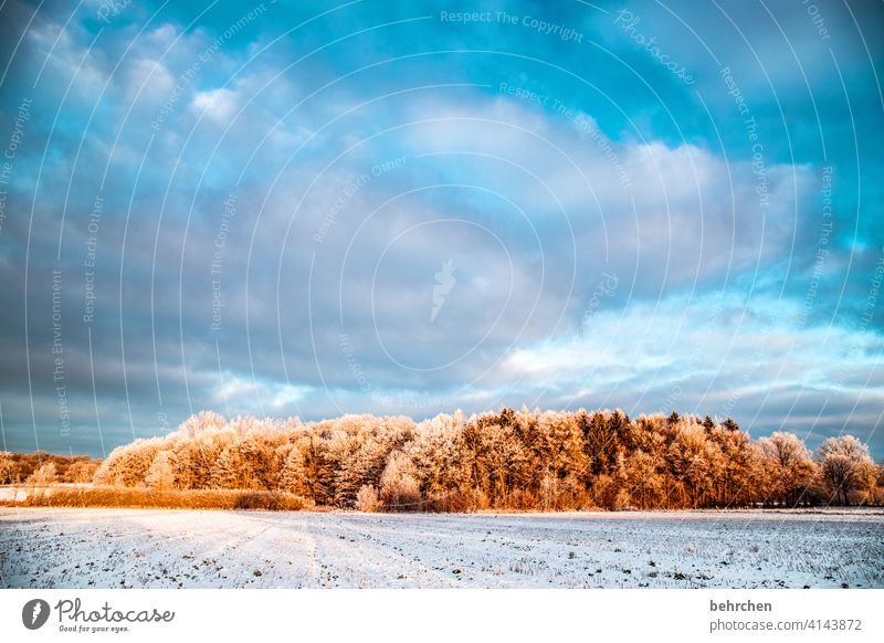 the morning hour has gold in its mouth Clouds Colour photo Calm Environment Landscape Sky Freeze Frozen Hoar frost Seasons Frost Nature Meadow Field trees