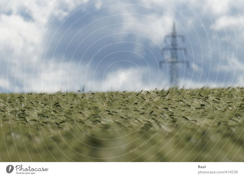 Energy for humans and animals High voltage power line Energy industry Renewable energy Nature Landscape Animal Sky Clouds Horizon Summer Climate change