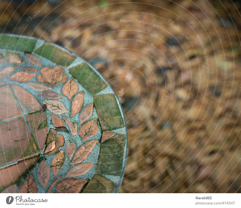 Autumn - Detail Garden Moody Leaf foliage Green Brown Table Colour photo Subdued colour Exterior shot Shallow depth of field Bird's-eye view