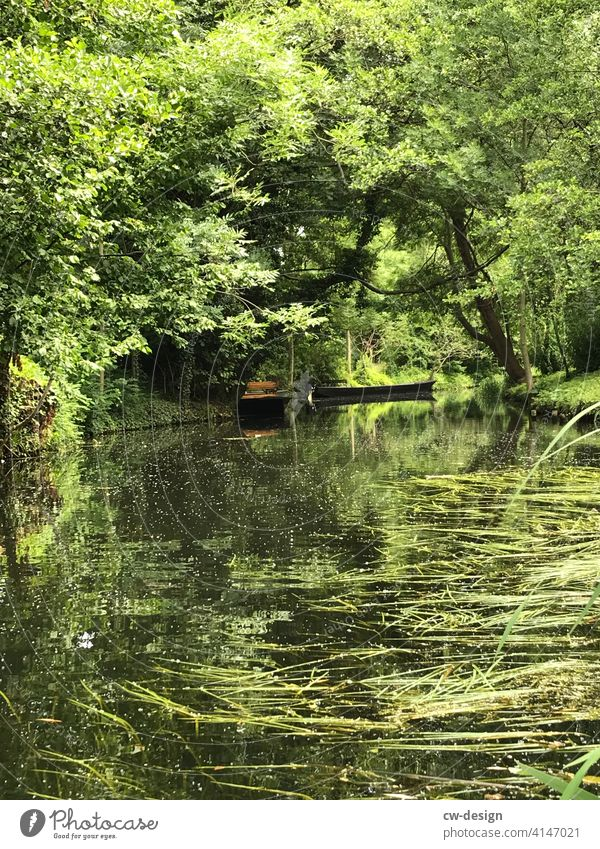 Boat trip in the Spreewald Canoe Rafts River Water Exterior shot Deserted Reflection Nature Tree Landscape Colour photo River bank Plant Environment