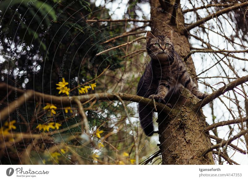 Cat in a tree Tree Exterior shot Nature Animal Deserted Pet Animal portrait 1 Colour photo Looking Observe Domestic cat Curiosity Cute Pelt Watchfulness Day