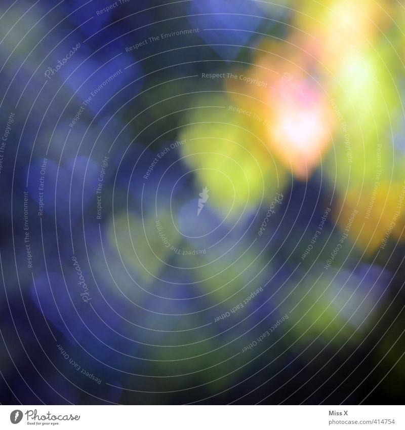 heart bokeh Sign Emotions Moody Love Love of animals Infatuation Romance Background picture Pattern Heart Heart-shaped Blur Multicoloured Colour photo Close-up