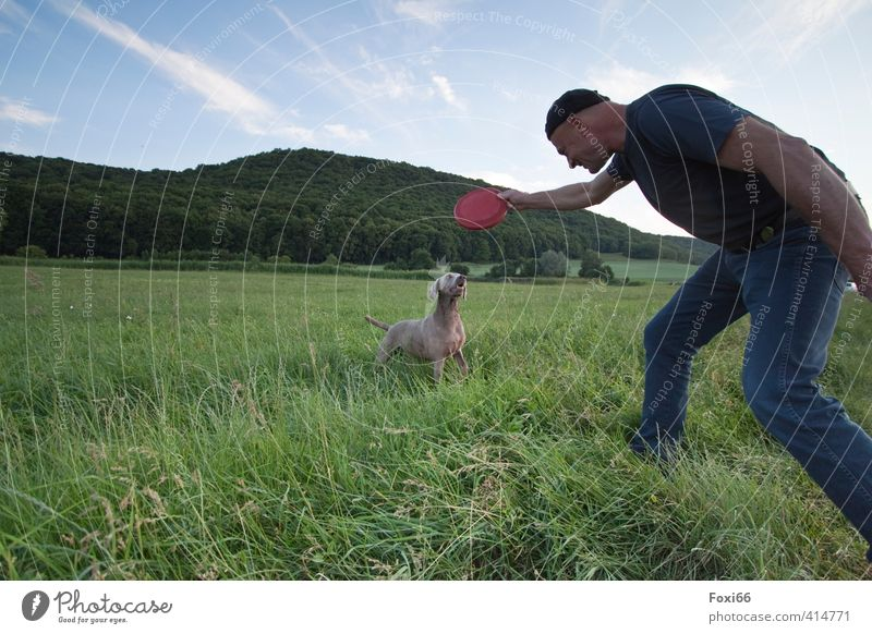 well-coordinated team Fitness Sports Training Hunting Frisbee Masculine Friendship Body 1 Human being Landscape Sky Clouds Summer Grass Meadow Animal Pet Dog