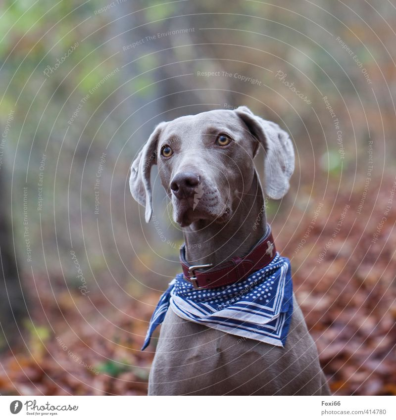 for Tia ---World Dog Day Environment Autumn Beautiful weather Bushes foliage Forest Pet 1 Animal Neckband Rag Observe Movement Discover Walking Playing Romp