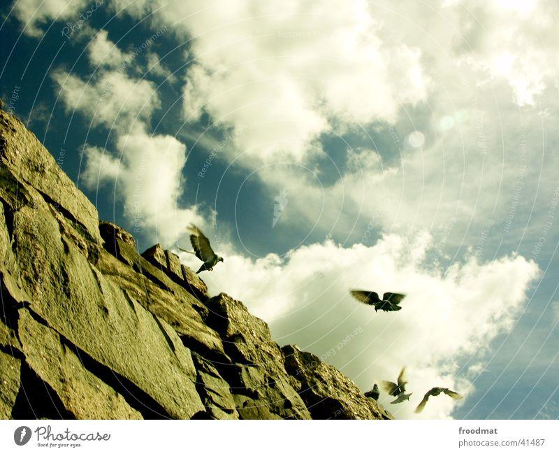 Sky Clouds Stone Bird Flying Rock Europe Pigeon Finland Helsinki