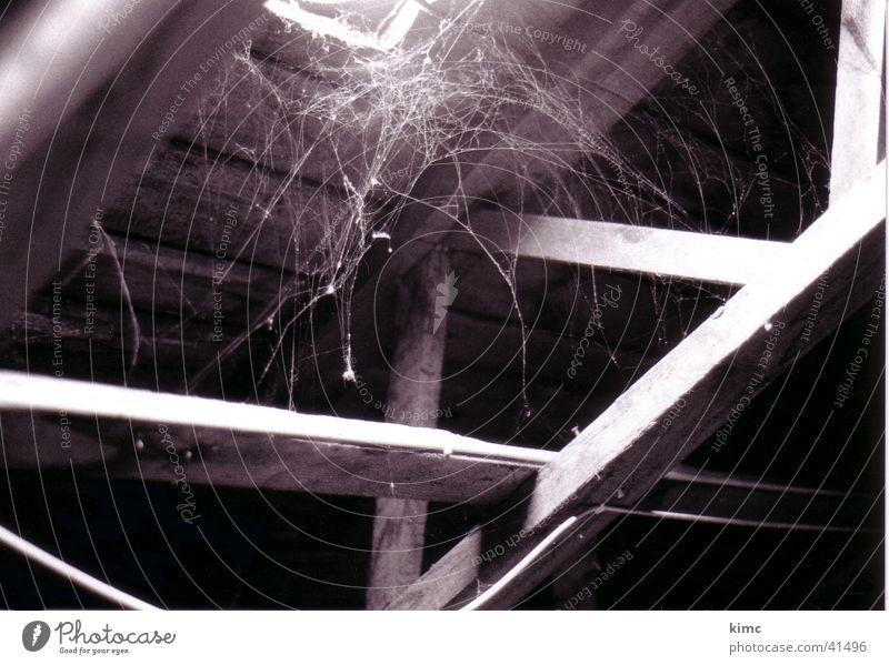 cobwebs Spider's web Attic Light Dust Hatch Black & white photo