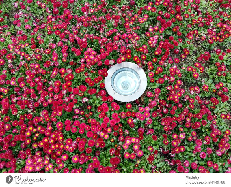Modern round spotlight in a flowerbed with hundreds of red flowers in a park in Bursa, Turkey Flower Blossom Flowerbed Garden Bed (Horticulture) Red