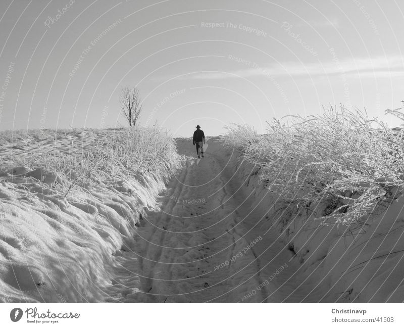 White Winter Loneliness Snow Lanes & trails Landscape To go for a walk